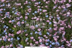 Уход за цветочными растениями
