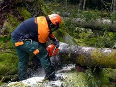 Cutting of high trees, urgent call Bila Tserkva,