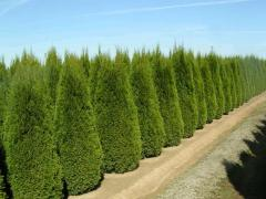 Landing of deciduous, coniferous trees, bushes,