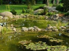 Оформление водоемов растениями