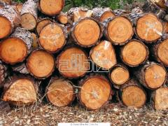 Заготовка дров