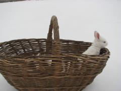 Купить тушки кролика, кролик в тушках ,