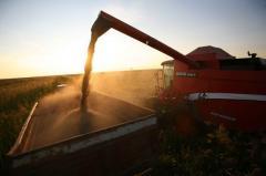 Автомобильные перевозки зерновых культур