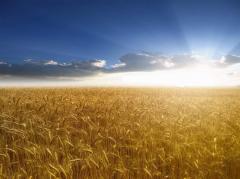 Автоперевозки зерновых