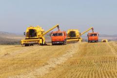 Перевозка зерновых большими объемами.