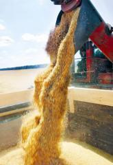 Перевозка зерновых культур автотранспортом