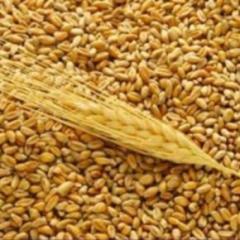 Перевозка зерновых культур по Украине