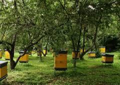 Разведение пчел в Украине