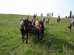 Конный тур в Ненадыху, тур выходного дня