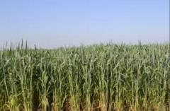 Семеноводство сельскохозяйственных культур, Украина
