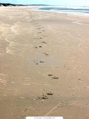 Намыв площадок для пляжа