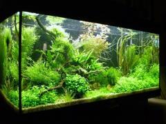 Обслуживание аквариумов киев и область,