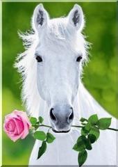 Лошадь на выезд
