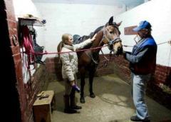 Постой лошадей и Аренда денников