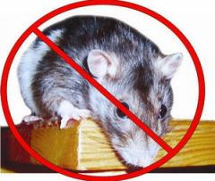 Deratization. Fight against rats, mice, rodents