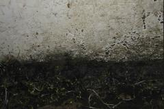 Elimination of a mold, disinfection of rooms and