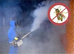Fight against wasps. Disposal of wasps.