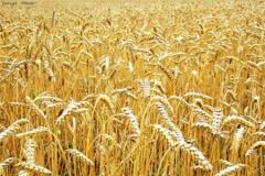 Поставка и комплектация сельхозоборудования