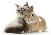 Відходи ветеринарної практики