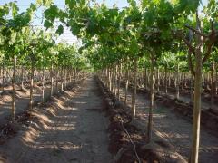 Капельный полив и орошение растений, сада, огорода