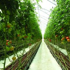 Installation of systems of watering in greenhouses