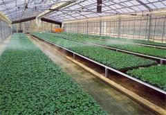 Drop watering of greenhouses, Drop irrigation of