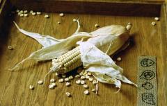 Заготовка, сушка, хранение, калибровка гибридной кукурузы