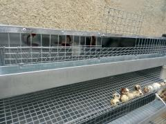 Production of cages for cultivation of rabbits