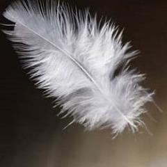 Чистка перьев и пуха