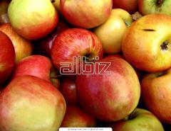 Овощехранилище для фруктов и овощей