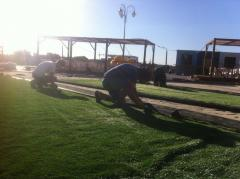 Laying of an artificial decorative grass