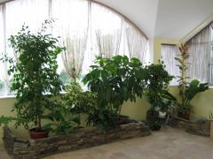 Winter garden - design, creation, service