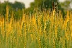 Химическая защита растений в Кировоградской области