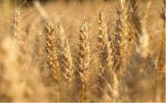 Борьба с сорной растительностью