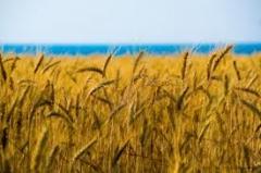 Агрохимические консультации