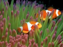 Консультации по выбору морских животных для