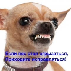 Дрессировка собак с проблемным поведением –