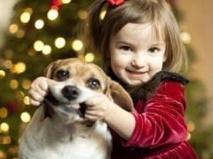 Зоопсихолог - учимся понимать свою собаку и