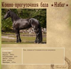 Продажа фризов и других лошадей