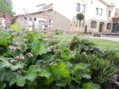 Подбор растений для озеленения сада