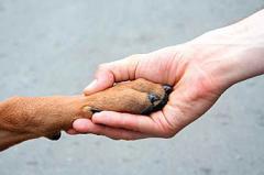 Профессиональная дрессировка молодых собак и