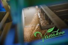 Очистка зерна от карантинных сорняков