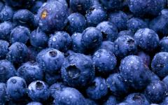 BLUEBERRIES IN UKRAINE - GOOD BUSINESS