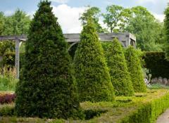 Фигурная стрижка деревьев.