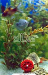 Подбор декораций для аквариумов