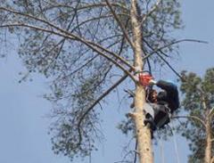 Спил деревьев николаев