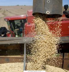 Перевозка зерна, закупка зерновых