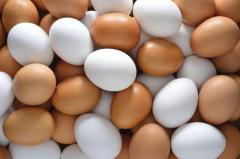 Куриное яйцо от производителя