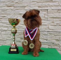 Элитная порода Гриффон Киев,  вязка собак