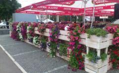 Gardening of cafe